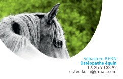 KERN Sébastien, ostéopathe animalier