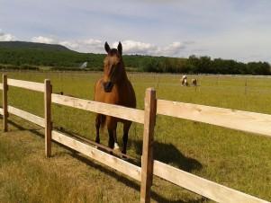Centre Equestre de Bastidan