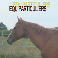 Equiparticuliers