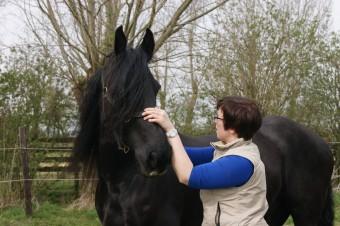 Hélène Delaval Ostéopathe Animalier
