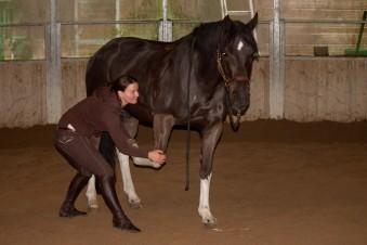 Osteopathe équin
