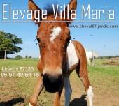 Elevage villa Maria